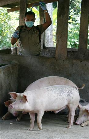 A veterinarian sprays disinfectant on pigs at farms in Jakarta.
